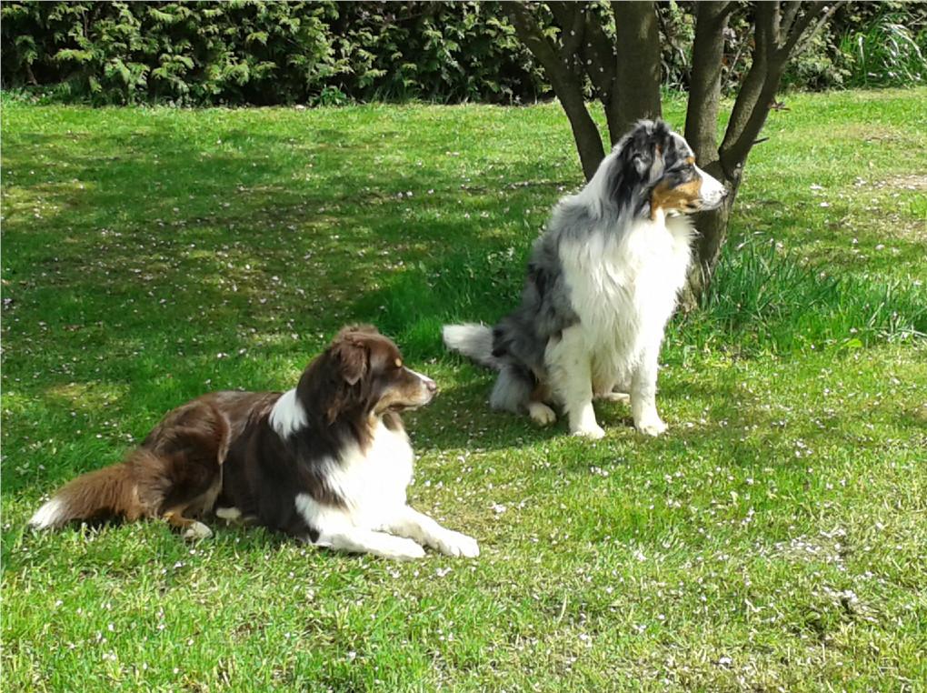 Hunde sind willkommen im Landhotel Gaisthaler Hof